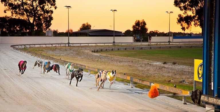 WA greyhounds