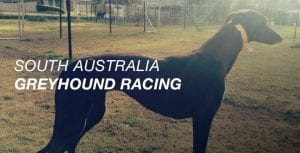SA greyhound racing