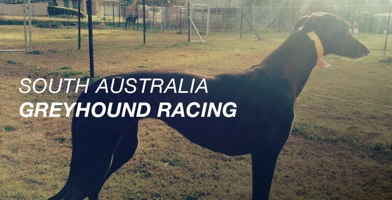 SA greyhound racing news 2018