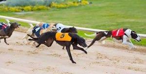 Greyhound racing in Ireland