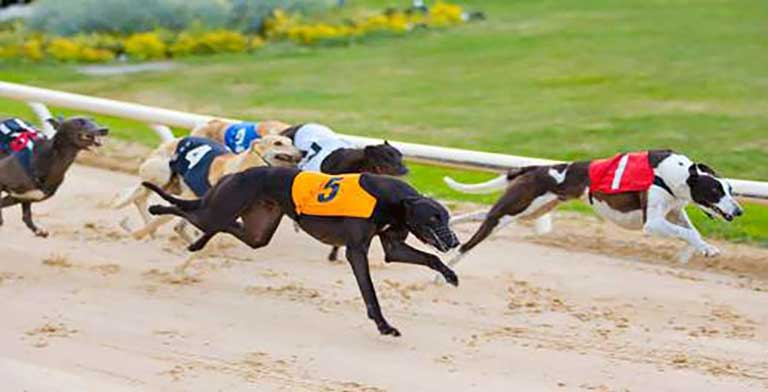 Top greyhound tested positive for cocaine three times