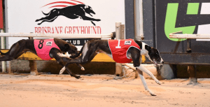 McCarthy holds a triple threat of capturing Group 3 Ipswich Cup