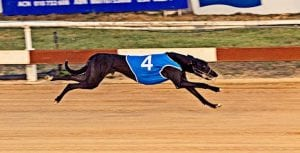 Vidi Vici out to upset top series chance in Townsville Cup heat