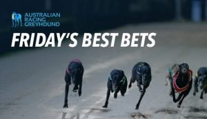 Best greyhound bets for Friday