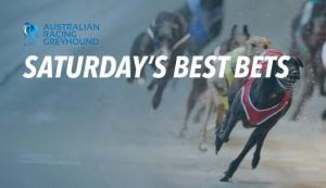 Greyhound racing's best bets