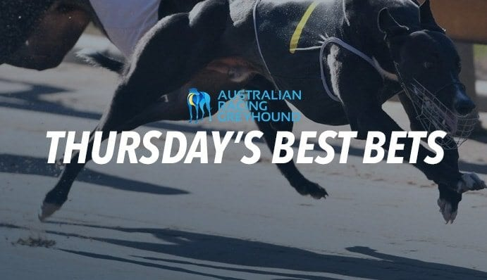 Greyhound tips for Thursday