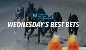 Wednesday free greyhound racing tips