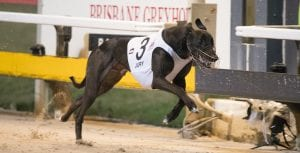 Nationals betting figures break records for QLD greyhound racing