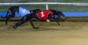 Can Bruton Miss cause an upset in Townsville Cup?