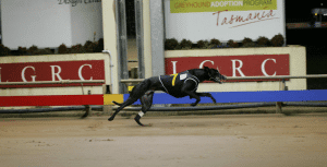 Tasmanian greyhound meetings now closed to the public