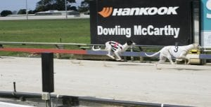 Englund's duo ready to burn in Puppy Championship at Devonport