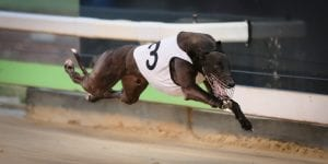 Bogie Bekim back to his brilliant best in time for Topgun Stayers