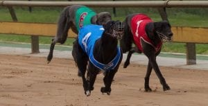 Gotham Queen ready to rule in Group 2 Geelong Cup heats