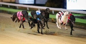 High Eden Frost boxed to cause an upset in 2017 Adelaide Cup