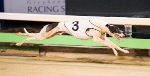 Mr Pupparazzi aiming for back to back Wentworth Park wins