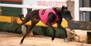 Lismore Cup the next target for Gold Coast Cup winner Opal Nera