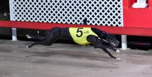 Terra Torra looking for the Casino Cup - Lismore Cup double