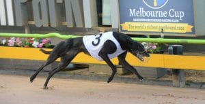 Group 1 Bold Trease win takes the pressure off Fanta Bale