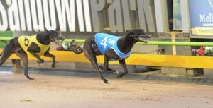 Kouta Mayhem connections hoping for career highlight in Cup