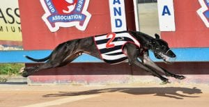 Lochinvar Hugo looking for 14 straight this Tuesday at Gosford