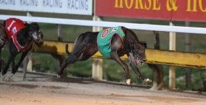 Off And On brilliant on debut at Ipswich ahead of Group 3 Cup