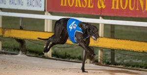 Spring Time Girl a leading local shot in Brisbane Cup heats