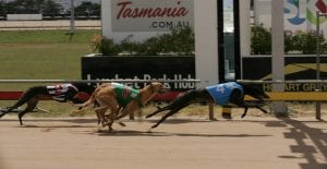 Fifteen Two primed for a crack at another Hobart Thousand