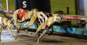Australian greyhound racing needs a new way ahead