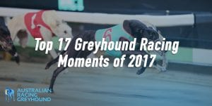 Top 17 greyhound racing moments of 2017
