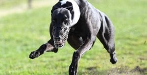 Central Coast trainers chasing first group 1 in Paws of Thunder