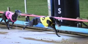 Tuggeragh out to score an upset in Friday's Group 2 Traralgon Cup