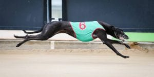 Mackellar excited about boom pup Victa Louise after slick wins