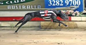 Slick's stunning heat win puts him into Australian Cup calculations