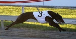 Opawa Rooster does it all the way in Group 2 Canty Futurity