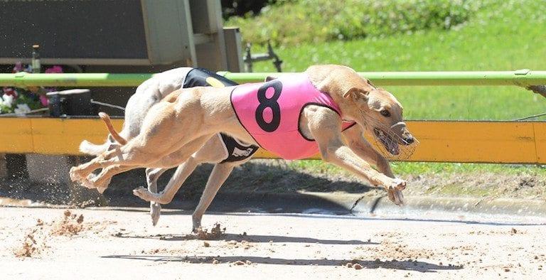 Sandown greyhounds 2018