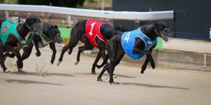 Friday at Gawler shifted to a twilight meet