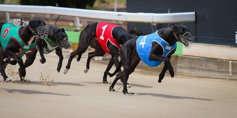 AU greyhound news