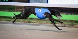 Ashom Monelli takes out Easter Cup at Angle Park