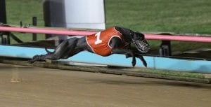 Bonnie Beauty makes brilliant staying debut at The Meadows