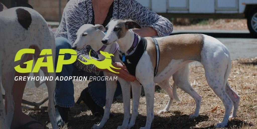 Greyhounds As Pets adoption program