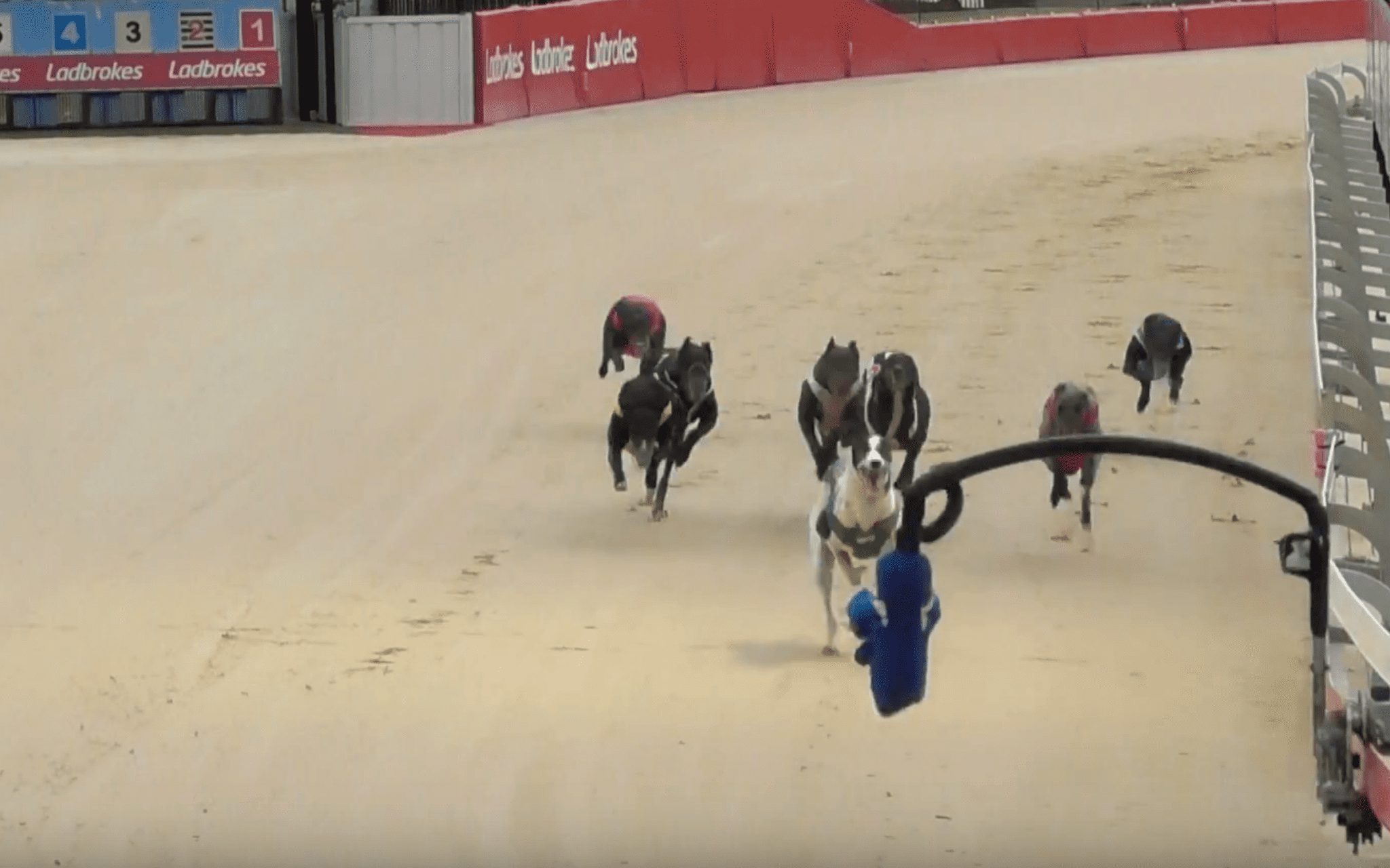 Gosford greyhounds are back racing