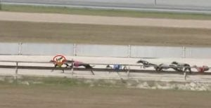 Bird costs greyhound the win at Albion Park
