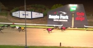 Fly For Trix wins Angle Park Leigh Rogers feature final