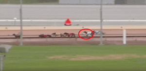 Odds on greyhound Untainted gets knocked out of race near last but still wins