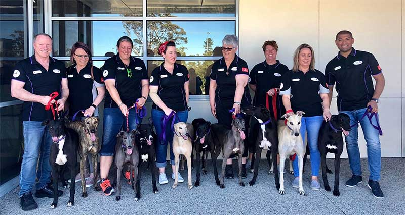 Dogs moving to the USA to be rehomed