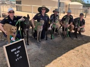 Seized RSPCA greyhounds all approved for green collar adoptions