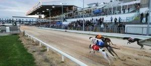 Irish Greyhound Racing Grinds To A Halt