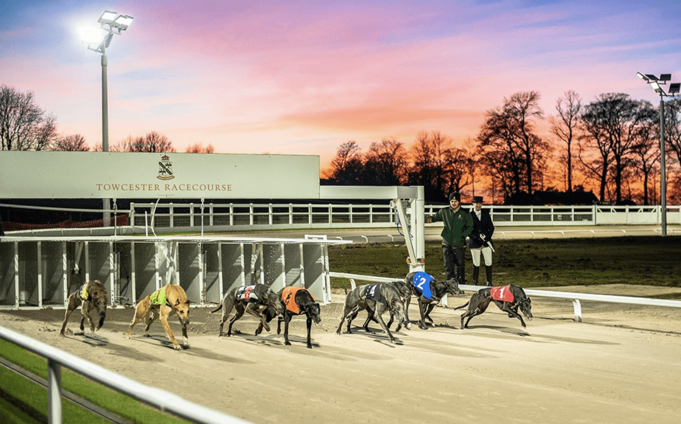 UK greyhound racing news
