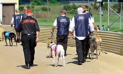 Greyhound Trainer