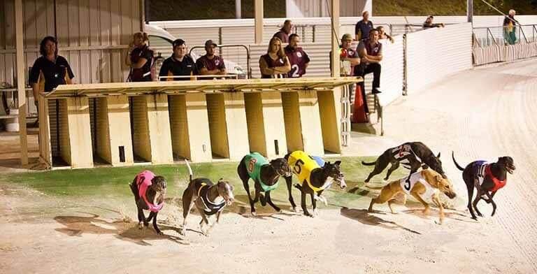 Group 2 Greyhound Betting